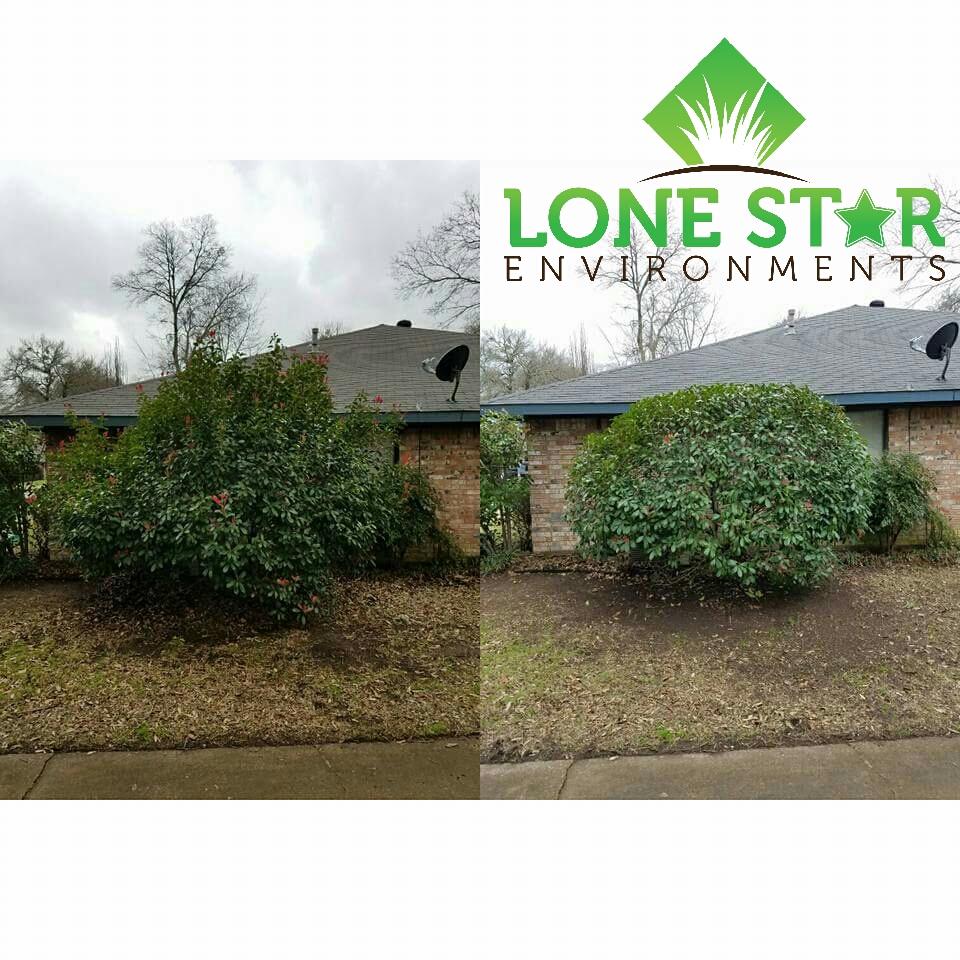 shrub trimming royse city texas
